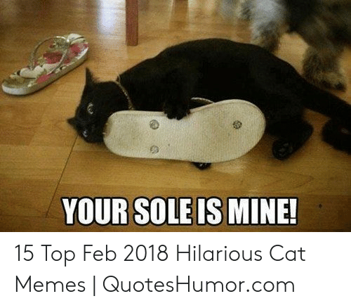 Memes, Hilarious, and Cat: YOUR SOLE IS MINE 15 Top Feb 2018 Hilarious Cat Memes | QuotesHumor.com