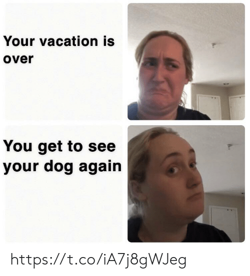 Vacation: Your vacation is  over  You get to see  your dog again https://t.co/iA7j8gWJeg