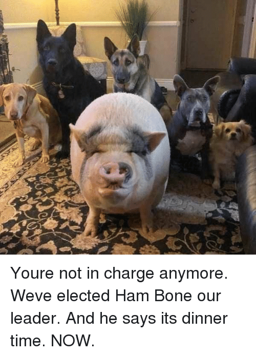 Time, Ham, and Bone: Youre not in charge anymore. Weve elected Ham Bone our leader. And he says its dinner time. NOW.