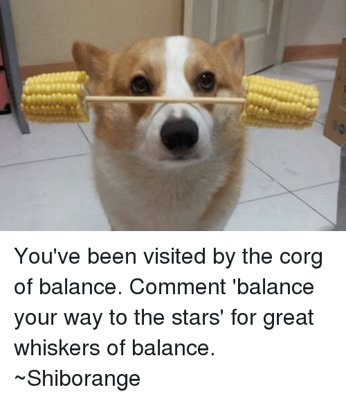 Corg: You've been visited by the corg of balance. Comment 'balance your way to the stars' for great whiskers of balance. ~Shiborange