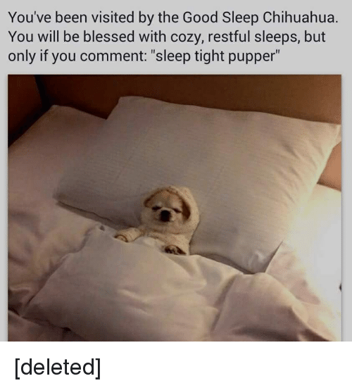 """circlejerk: You've been visited by the Good Sleep Chihuahua.  You will be blessed with cozy, restful Sleeps, but  only if you comment: """"sleep tight pupper"""" [deleted]"""