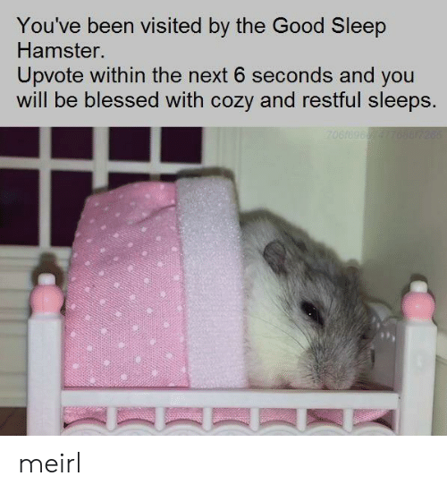 Blessed, Good, and Hamster: You've been visited by the Good Sleep  Hamster.  Upvote within the next 6 seconds and you  will be blessed with cozy and restful sleeps. meirl