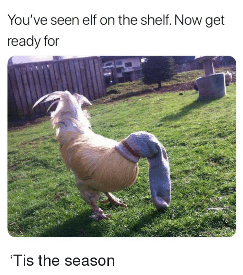 On The Shelf: You've seen elf on the shelf. Now get  ready for 'Tis the season
