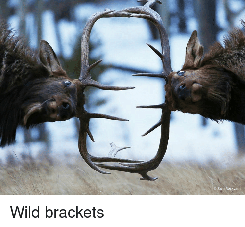 Wild,  Brackets, and Zach: Zach Rockvam Wild brackets