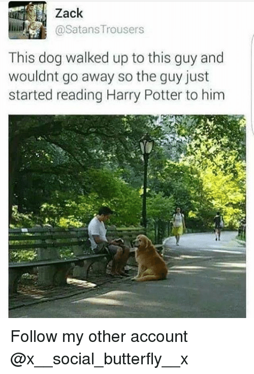 Harry Potter, Memes, and Butterfly: Zack  aSatans Trousers  This dog walked up to this guy and  wouldnt go away so the guy just  started reading Harry Potter to him Follow my other account @x__social_butterfly__x