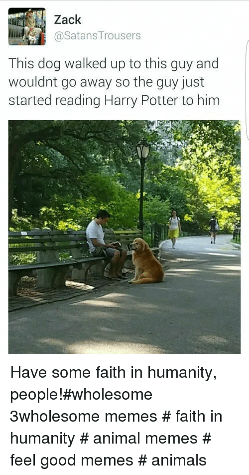 Animals, Harry Potter, and Memes: Zack  @SatansTrousers  This dog walked up to this guy and  wouldnt go away so the quy just  started reading Harry Potter to him Have some faith in humanity, people!#wholesome 3wholesome memes # faith in humanity # animal memes # feel good memes # animals