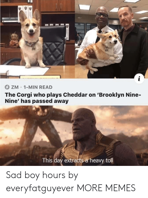toll: ZM 1-MIN READ  The Corgi who plays Cheddar on 'Brooklyn Nine-  Nine' has passed away  This day extracts a heavy toll Sad boy hours by everyfatguyever MORE MEMES