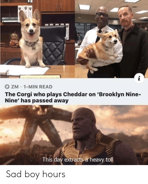sad boy: ZM 1-MIN READ  The Corgi who plays Cheddar on 'Brooklyn Nine-  Nine' has passed away  This day extracts a heavy toll Sad boy hours
