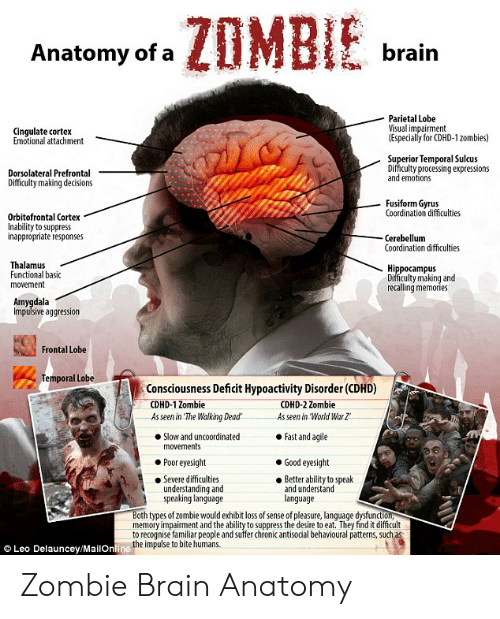 Reddit, The Walking Dead, and Brain: ZOMBIE  brain  Anatomy of a  Parietal Lobe  Visual impairment  (Especially for CDHD-120mbies)  Cingulate cortex  Emotional attachment  Superior Temporal Sulcus  Difficulty processing expressions  and emotions  Dorsolateral Prefrontal  Difficulty making decisions  Fusiform Gyrus  Coordination difficulties  Orbitofrontal Cortex  Inability to suppress  inappropriate responses  Cerebellum  Coordination difficulties  Thalamus  Functional basic  movement  Hippocampus  Difficulty making and  recalling memories  Amygdala  Impulsive aggression  Frontal Lobe  Temporal Lobe  Consciousness Deficit Hypoactivity Disorder (CDHD)  CDHD-1 Zombie  As seen in The Walking Dead  CDHD-2 Zombie  As seen in World War Z  Fast and agile  Slow and uncoordinated  movements  Poor eyesight  Good eyesight  Severe difficulties  understanding and  speaking language  Better ability to speak  and understand  language  Both types of zombie would exhibit loss of sense of pleasure, language dysfunction,  memory impairment and the ability to suppress the desire to eat. They find it difficult  to recognise familiar people and suffer cChronic antisocial behavioural patterns, such as  Leo Delauncey/MailOnline the impulse to bite humans. Zombie Brain Anatomy