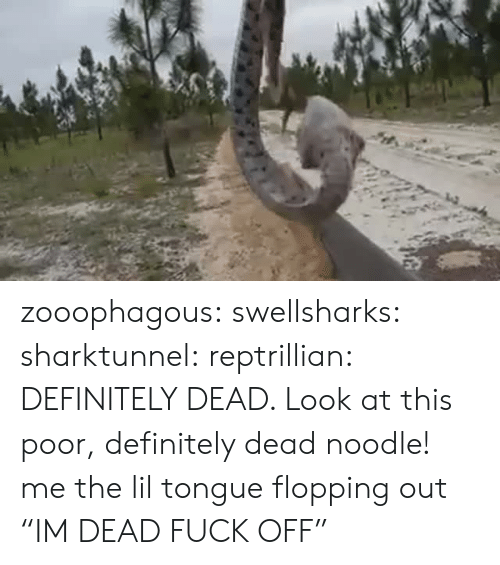 "Noodle: zooophagous: swellsharks:  sharktunnel:  reptrillian:  DEFINITELY DEAD. Look at this poor, definitely dead noodle!  me  the lil tongue flopping out   ""IM DEAD FUCK OFF"""